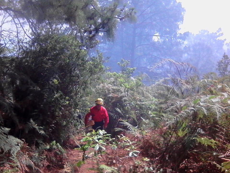 Acaba fuego 13 hectáreas de bosque en Huauchinango